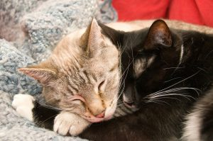 Professional Cuddle Therapy Improves Relaxation
